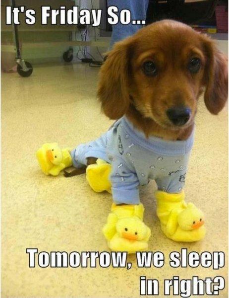 It's Friday! - Dog Humor