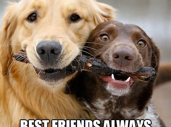 Funny Dogs Pictures With Quotes