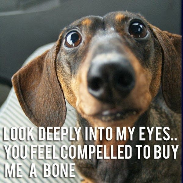 Look Deeply Into My Eyes Dog Humor