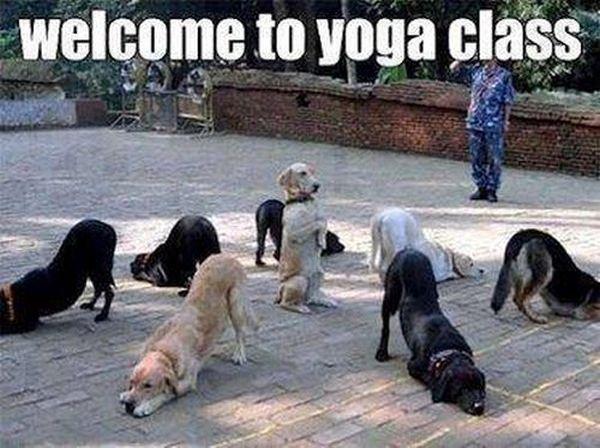 dog-humor-funny-Welcome-To-Yoga-Class.jp